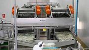 Machine to separate the pulp mussels