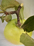 Fiber dietary fiber food Apple