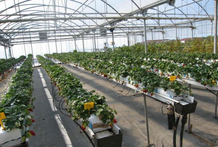 Маты для выращивания клубники 2