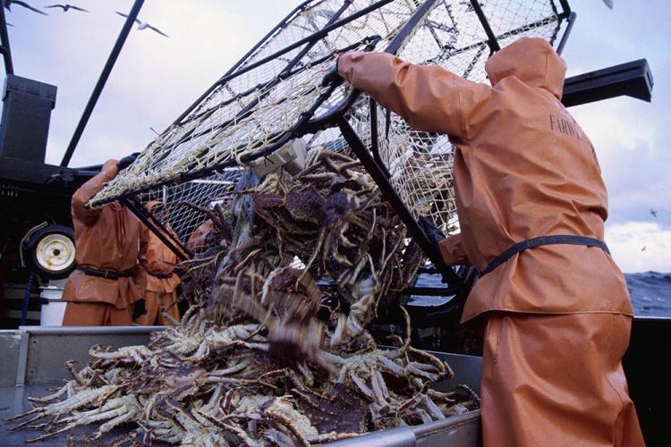 Ловля крабов в море