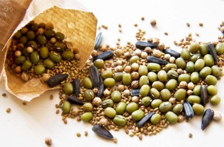 Семена Nunhems