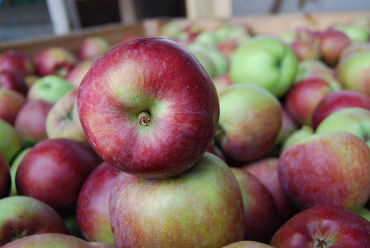 Лучшие зимние яблоки