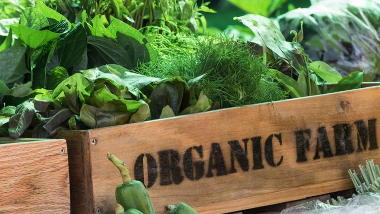 Эко, био, органик и экологически чистый продукт - что всё это значит?