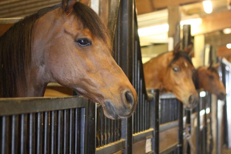 Успешное коневодство: как и для чего разводить лошадей